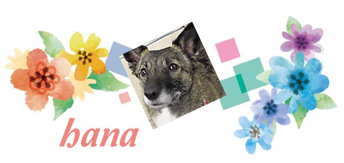 マザー,ルーフ,保護,犬,猫,福岡,ハナ,ミックス