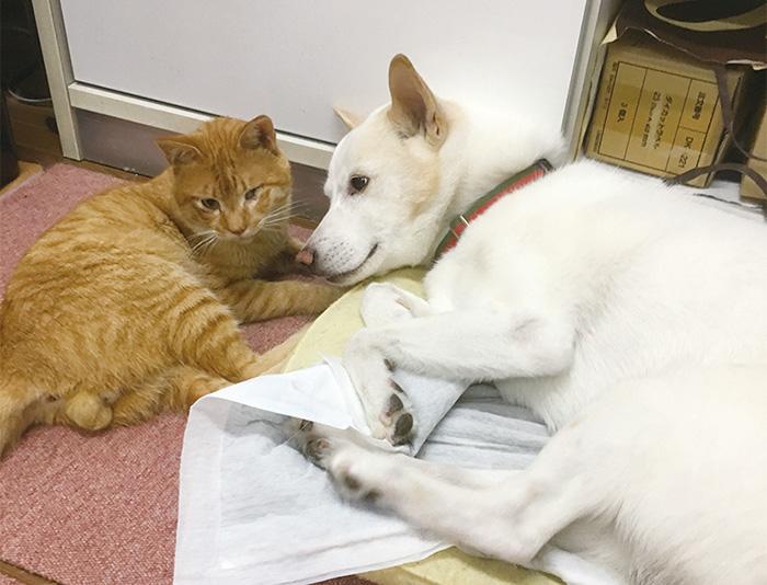 マザー,ルーフ,福岡,引越し,保護犬,保護猫,茶トラ