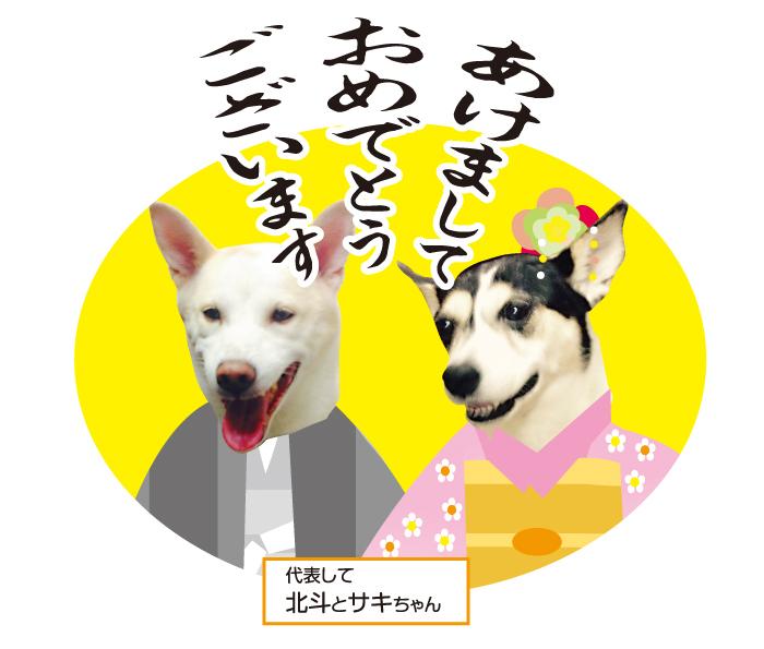 今日の犬猫,マザー,ルーフ,福岡,新年,保護猫,保護犬