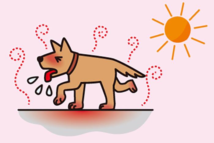 マザー,ルーフ,保護犬,保護猫,暑さ,熱中症,対策