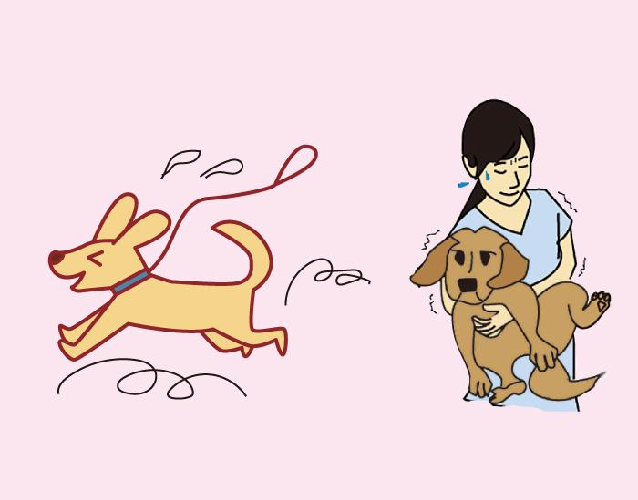 マザー,ルーフ,保護犬,保護猫,里親,問題,行動