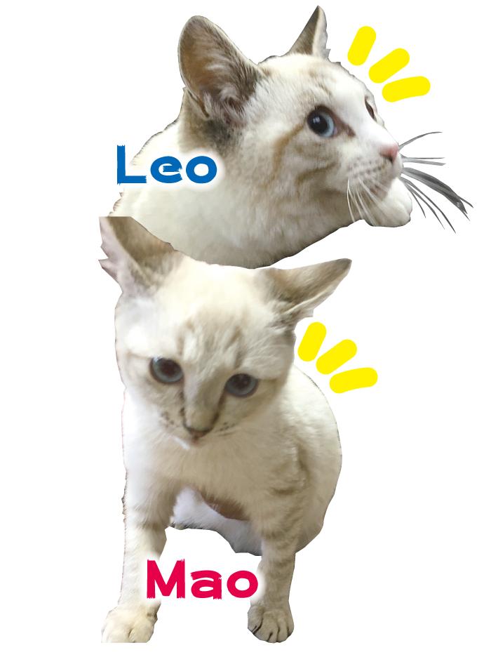 マザー,ルーフ,福岡,保護猫,子猫,病気,感染症,入院