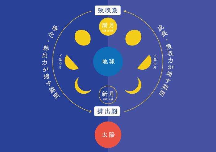 月,リズム,満ち欠け,バイオリズム,記者,コラム,満月,上弦,下弦,新月