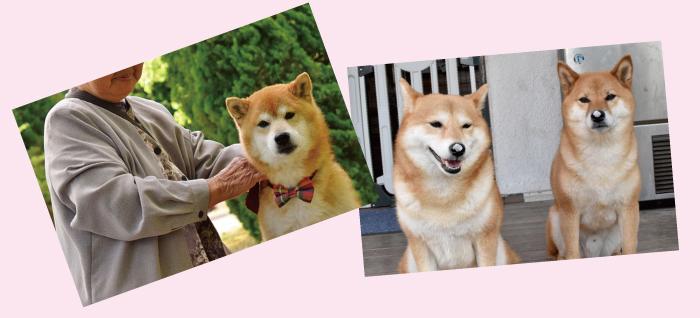 マザー,ルーフ,セラピー,ドッグ,訓練,捨て犬,保護,福岡