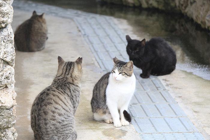 記者,コラム,猫,フン,拾う,野良猫,保護猫,猫好き