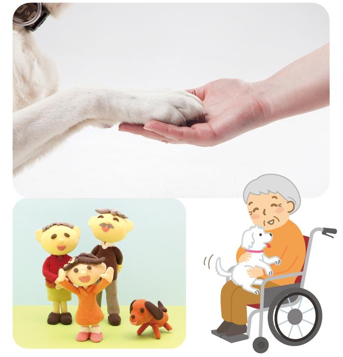 マザー,ルーフ,福岡,セラピー,ドッグ,保護犬,保護猫