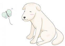 高齢になった犬に関節炎が発症。改善策は?
