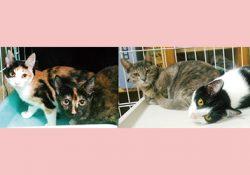 去年の夏生まれの子猫たちが避妊手術に行きました。