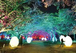 今年も福岡城跡が光のアート空間に!