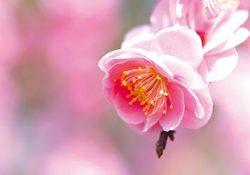 観に行こう癒される花たち