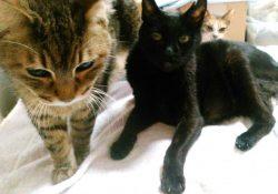 季節のかわり目は、家猫も健康チェックを!