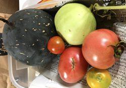 家庭菜園の初めての嬉しい収穫です!