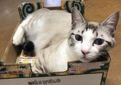 保護猫のレオとマオが入院しました。