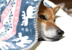 冬になると動物たちは何故か泌尿器の疾患に…