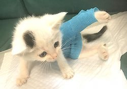 400gの小さな赤ちゃん猫がやって来た