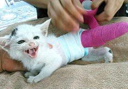 赤ちゃん猫のテーピングが外れたので病院へ