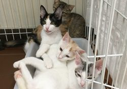 仔猫4匹のうち2匹が里親に行くことになりました