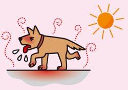 これからの暑さ対策は万全ですか?