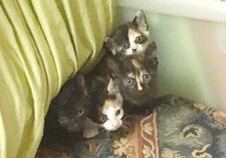 外猫のハチミツが赤ちゃんを産んだようだ!