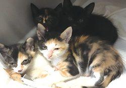 赤ちゃん猫4匹の里親さん大募集中です!