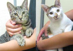 この猫たちも里親さん大募集中です。