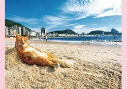 岩合光昭の世界ネコ歩き2 -招待券プレゼント
