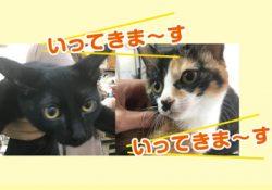 2匹の子猫が里親さんに行きました。