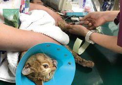 交通事故にあった猫を保護してしまいました
