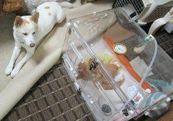 動物を介護する介護猫がいるそうだ!