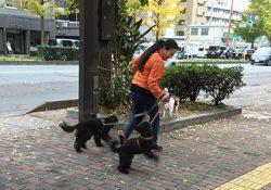 編集長とキラリ、ベリー、北斗のお散歩出発。