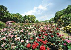 part1_福岡の花スポットをご紹介します!