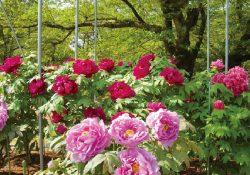 part3_福岡の花スポットをご紹介します!