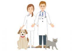 夜7時〜9時に病気になっても行ける動物病院をチェック!